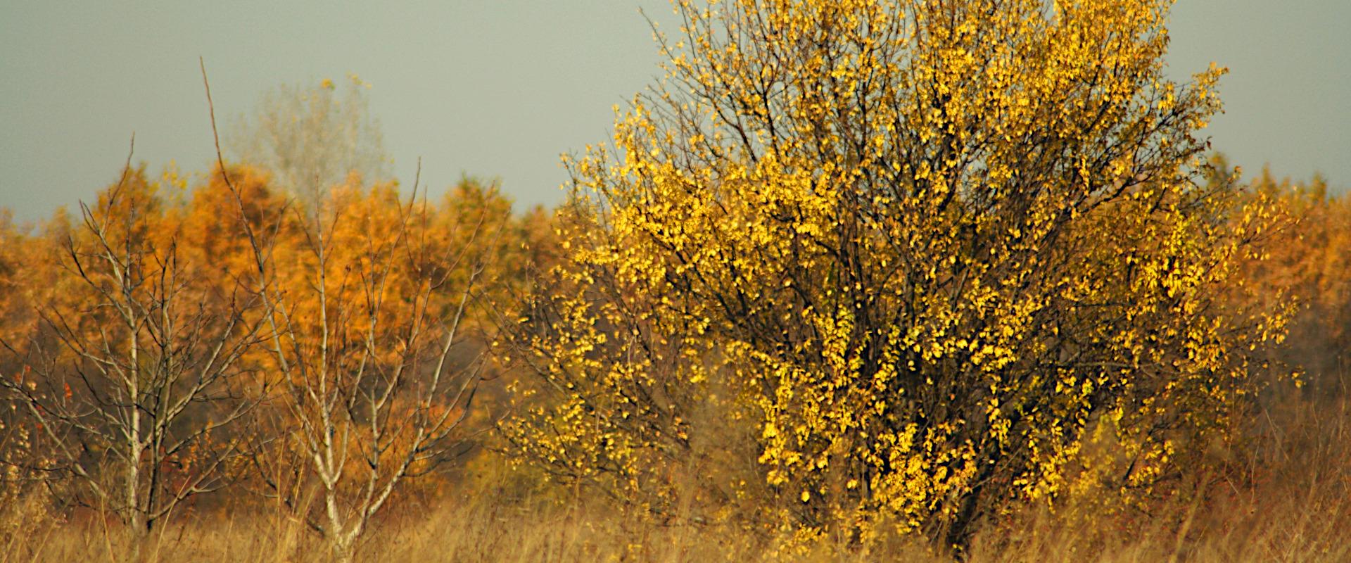 Sweet and bitter autumn memories